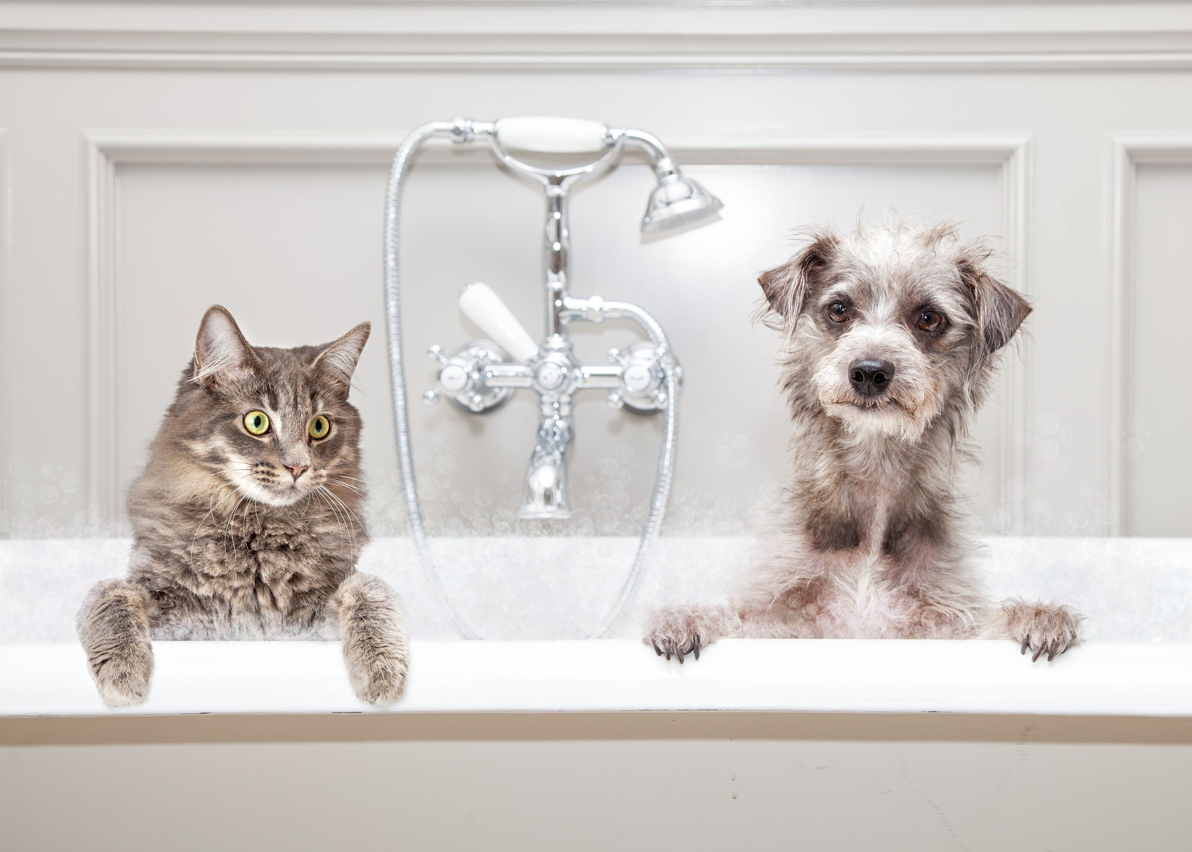 Pet Friendly Bathrooms: Design Yours